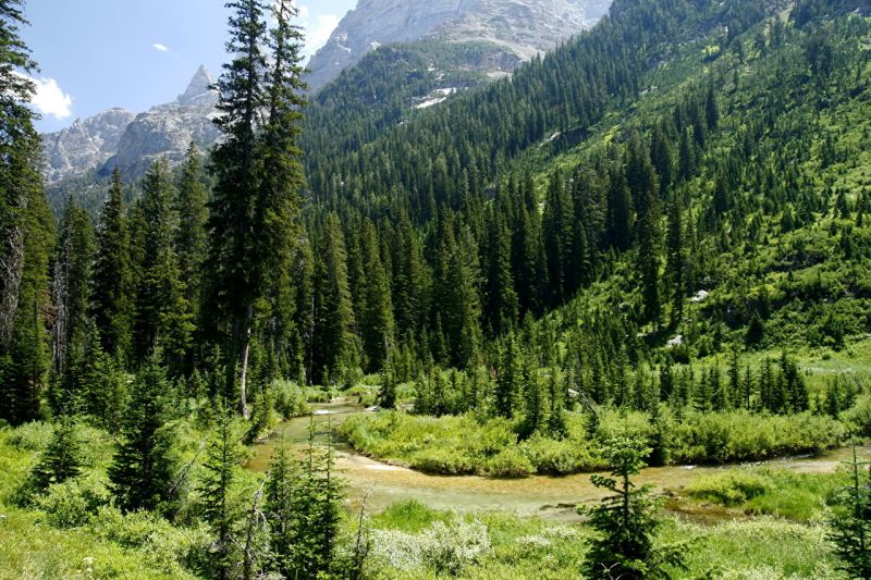 Sierra Nevada Pale Ale Klon - Ursprung des Cascade Hopfen - Das Kaskadengebirge